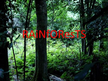 RAiNfOResTS. What Makes a Rainforest A rainforest is made of thousands plants and animals.