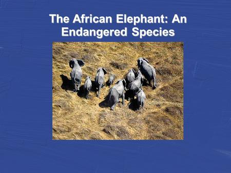 The African Elephant: An Endangered Species. African Elephants, the largest living land animals, are being pushed into extinction by poaching and the.