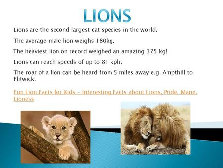 Lions are the second largest cat species in the world. The average male lion weighs 180kg. The heaviest lion on record weighed an amazing 375 kg! Lions.