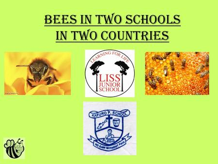 Bees in Two Schools In two countries. Why we chose this idea? Our initial thoughts We thought of this idea a number of good reasons. The reasons are: