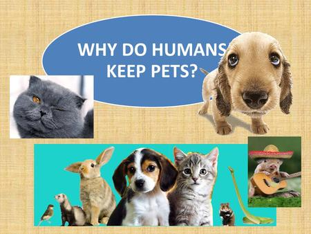 WHY DO HUMANS KEEP PETS?. Several points: 1)I don't own my cat, my cat owns me. 2)My cat is in many ways a baby substitute. I'm 41 & a spinster, &