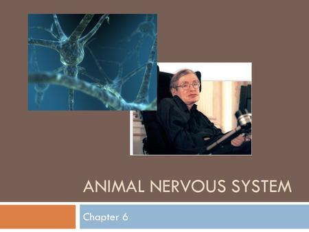 ANIMAL NERVOUS SYSTEM Chapter 6.