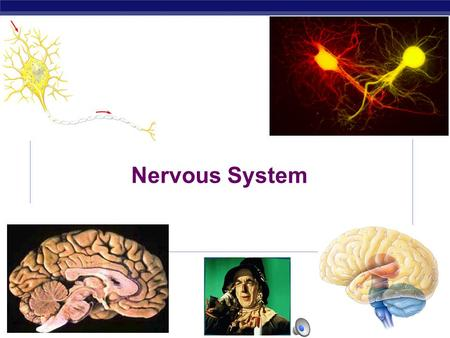 AP Biology 2003-2004 Nervous System Regents Biology 2003-2004 Why do animals need a nervous system?  Because the world is always coming at you! Remember…