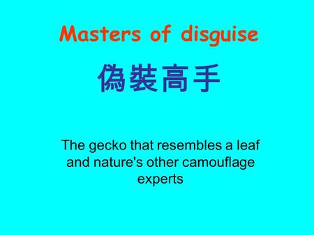 The gecko that resembles a leaf and nature's other camouflage experts 偽裝高手 Masters of disguise.