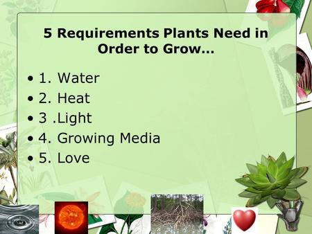 5 Requirements Plants Need in Order to Grow…