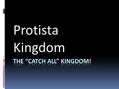 "The ""Catch All"" Kingdom!"