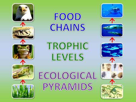 FOOD CHAINS TROPHIC LEVELS ECOLOGICAL PYRAMIDS.