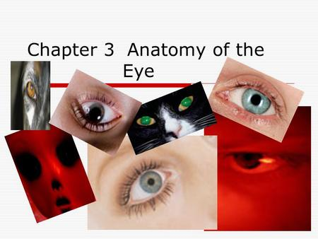 Chapter 3 Anatomy of the Eye. Sclera  The white part of the eyeball is called the sclera (say: sklair- uh). The sclera is made of a tough material.
