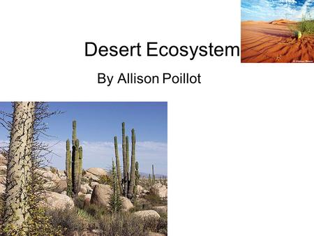 Desert Ecosystem By Allison Poillot. Climate The desert is very dry and warm. A very little amount of rain rains a year. Some deserts can be over 100.