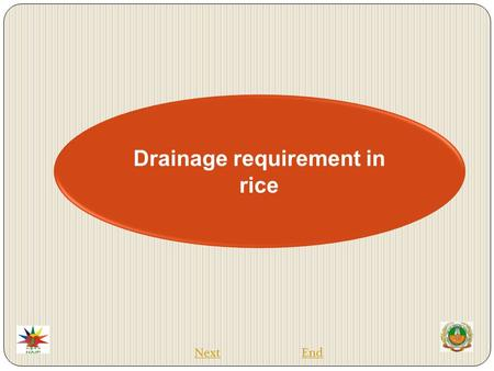 Drainage requirement in rice EndNext.  Rice is the most important food crop of the world.  Rice is a semi-aquatic plant and hence survives better under.