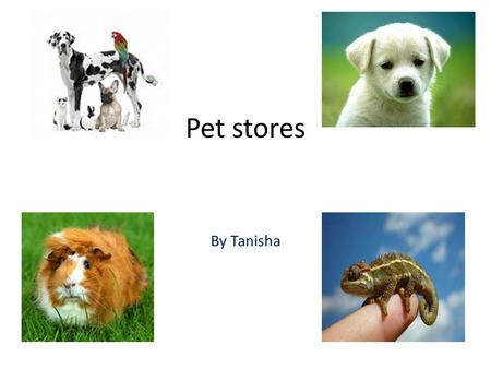 Pet stores By Tanisha t. Whats a pet store A pet shop is basically a shop that sells a multiple of animals which are pet acceptable which means that they.