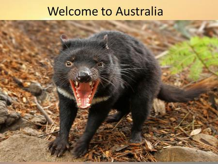 Welcome to Australia. Australia General Information Population: 21,007,310 (53 rd ) Land Size: 7,686,850 km² (6 th ) Currency: Australian Dollar (AUD)