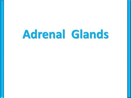 Adrenal Glands.