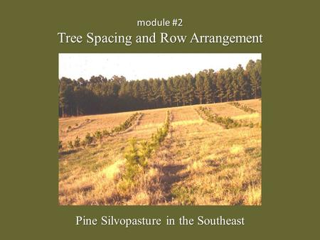 Module #2 Tree Spacing and Row Arrangement Pine Silvopasture in the Southeast.
