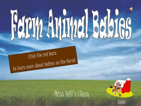Miss Hill's Class Home Click the red barn to learn more about babies on the farm!