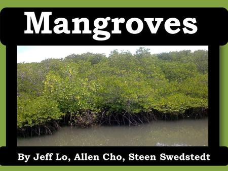 Mangroves By Jeff Lo, Allen Cho, Steen Swedstedt.