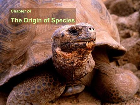 Chapter 24 The Origin of Species.