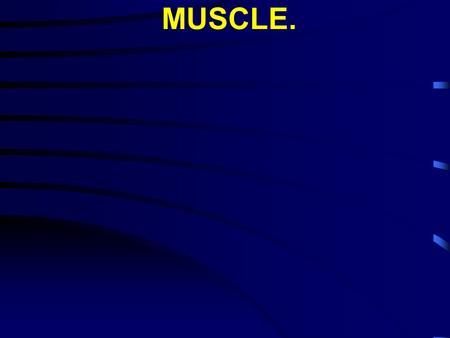 MUSCLE.. I. Types of muscle: A. Striated muscle.