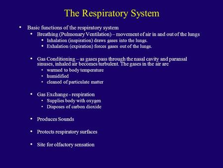 The Respiratory System Basic functions of the respiratory system Breathing (Pulmonary Ventilation) – movement of air in and out of the lungs Inhalation.