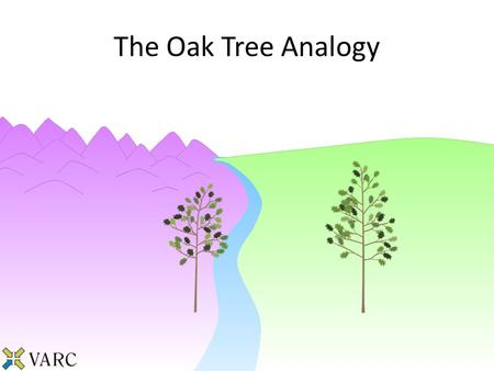 The Oak Tree Analogy. For the past year, these gardeners have been tending to their oak trees trying to maximize the height of the trees. Explaining the.