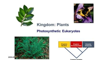 2006-2007 Kingdom Bacteria Kingdom Archaeabacteria Domaine Eukaryote Common ancestor Kingdom: Plants Photosynthetic Eukaryotes.