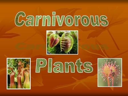 Carnivorous Plants Carnivorous Plants If an animal eats a plant, it is of no particular interest; but when a plant eats an animal, that is of interest.
