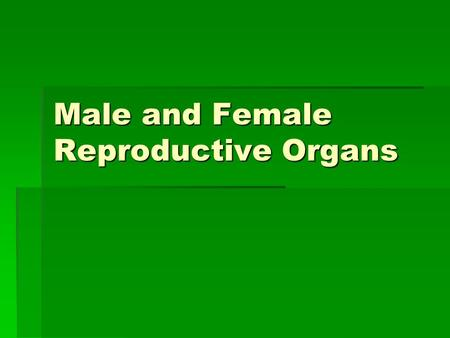 Male and Female Reproductive Organs. Male Reproductive System  Sperm-sex cells that are produced by the testes and is needed to fertilize an egg.  Testes(testicles)-make.