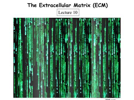 The Extracellular Matrix (ECM)