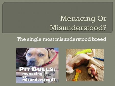 Dog owners' concerns over dog deaths
