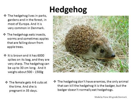Hedgehog  The hedgehog lives in parks, gardens and in the forest, in most of Europe. And it is very common in Denmark.  The hedgehogs eats insects, worms.
