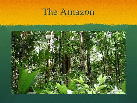 The Amazon. The amazon forest is located in the upper section of Brazil south of the Equator. It is also found in different other countries including,