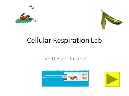 Cellular Respiration Lab Lab Design Tutorial. Instructions Use this tutorial along with the lab papers and sample lab materials to help your group understand.