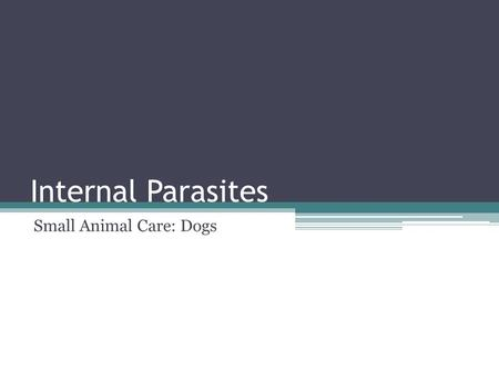 Internal Parasites Small Animal Care: Dogs. What is a Parasite? Parasite: Organisms that can live in or on another living thing. ▫Internal- On the inside.