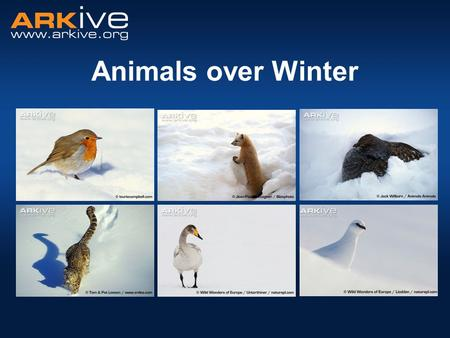 Animals over Winter. Temperature decreases – As low as −50°C in the Arctic! Sometimes even colder! Hours of daylight decrease – In some places it is dark.