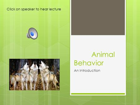 Animal Behavior An Introduction Click on speaker to hear lecture.