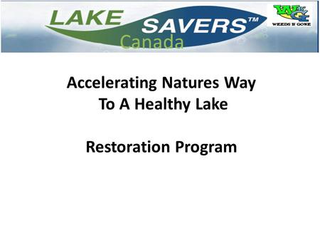 Accelerating Natures Way To A Healthy Lake Restoration Program Canada.