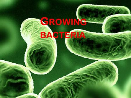 G ROWING BACTERIA. The action of antibiotics and disinfectants can be investigated using cultures of microorganisms (populations of microorganisms that.