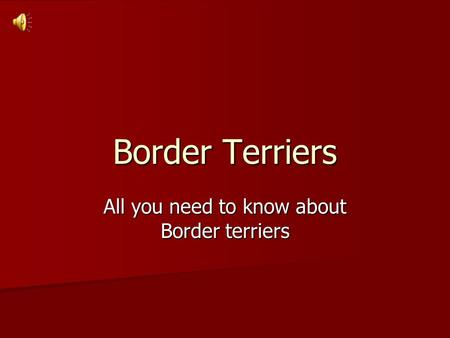 Border Terriers All you need to know about Border terriers.