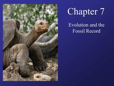 1 Chapter 7 Evolution and the Fossil Record. 2 Guiding Questions What lines of evidence convinced Charles Darwin that organic evolution produced the species.