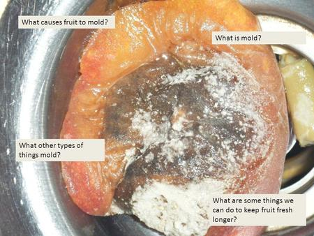 What causes fruit to mold? What are some things we can do to keep fruit fresh longer? What is mold? What other types of things mold?