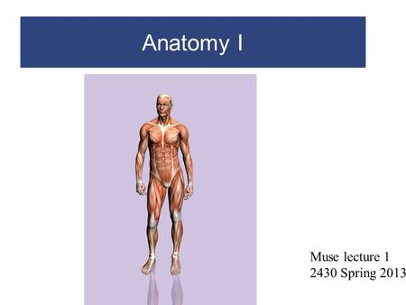 Anatomy I Muse lecture 1 2430 Spring 2013.
