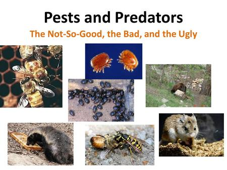 Pests and Predators The Not-So-Good, the Bad, and the Ugly.