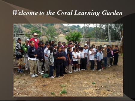 Welcome to the Coral Learning Garden. Nature is astounding. Plants, with only the water and food that shows up; with no tending, fertilizer, or pesticides.