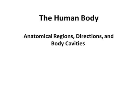 The Human Body Anatomical Regions, Directions, and Body Cavities.