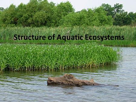 Structure of Aquatic Ecosystems. Relative importance of allochthonous versus autochthonous sources of nutrients sediments organic matter (dissolved and.