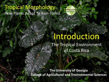 Tropical Morphology How Plants Adapt To Rain Forest The University of Georgia College of Agricultural and Environmental Sciences Introduction The Tropical.