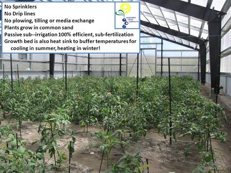 No Sprinklers No Drip lines No plowing, tilling or media exchange Plants grow in common sand Passive sub--irrigation 100% efficient, sub-fertilization.