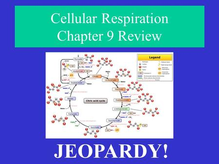 Cellular Respiration Chapter 9 Review JEOPARDY! HavingABreakdownLocation,Location,Location! What's In A Name?MolecularMix-UpAnaerobicWorkout Final Jeopardy!#1Final.