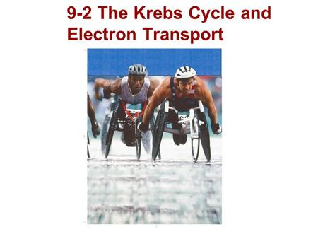 9-2 The Krebs Cycle and Electron Transport. Oxygen is required for the final steps of cellular respiration. Because the pathways of cellular respiration.