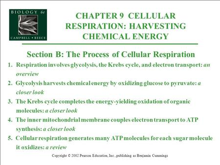 CHAPTER 9 CELLULAR RESPIRATION: HARVESTING CHEMICAL ENERGY
